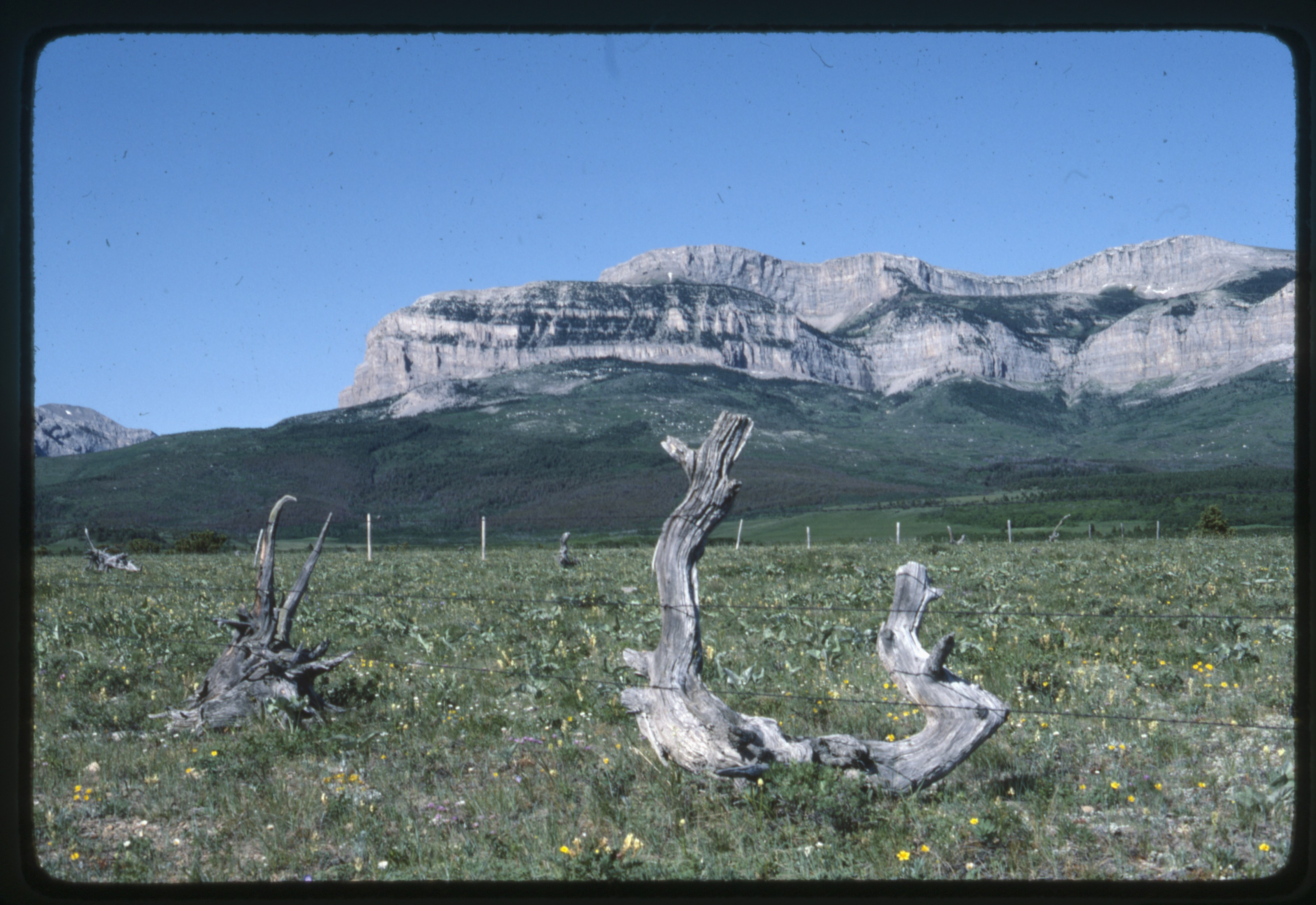Stumps and fence posts with mountain behind